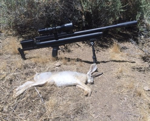 Jackrabbit kill .308 slayer