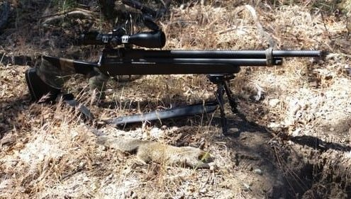 hunting ground squirrels with an airgun