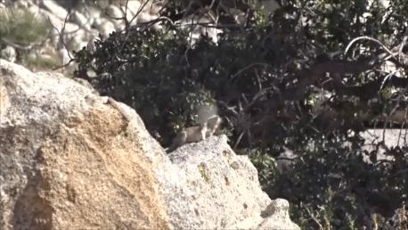 ground squirrel kill
