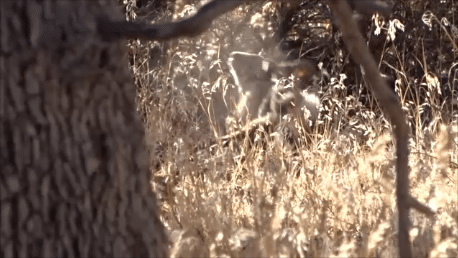 cottontail bow hunt